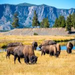 4 of the Top Locations to See the Most Wildlife in the U.S.