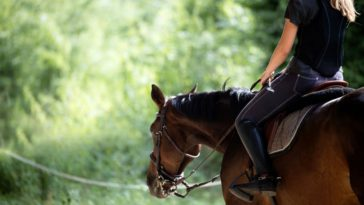 3 Things To Know Before Going Horseback Riding